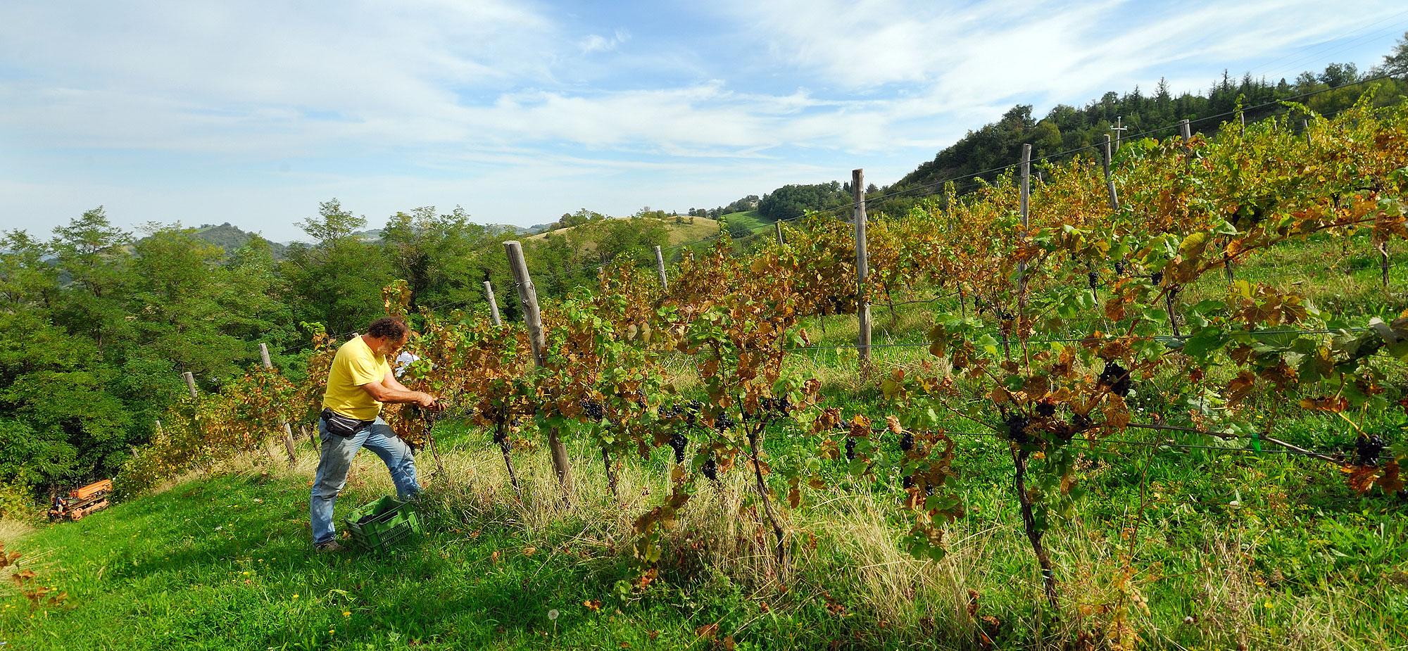 Escursione termica che regala al frutto della vite profumi intensi e persistenti che caratterizzano il vino prodotto.